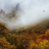 Утро туманное :: Владимир Колесников