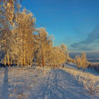 В лучах закатного солнца. :: Наталья Юрова