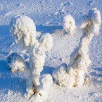 Снежные кактусы :: Анатолий Иргл