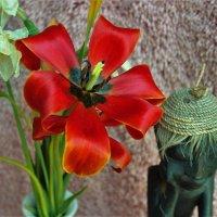 Осень тюльпана :: Сергей Чиняев