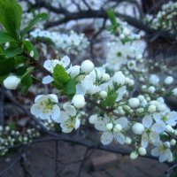когда весна придет... :: Елена Семигина