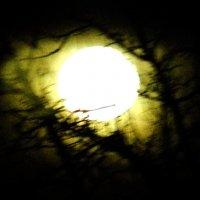 луна в окне :: Леонид Натапов