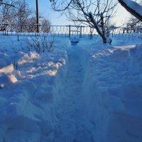 Экскурсия в Гадюкино зимой (33) :: Александр Резуненко
