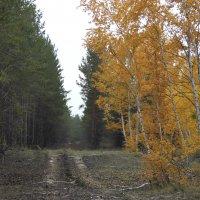 Осень :: Екатерина Пономарева