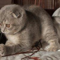 Котёнок с мячом :: Юрий Пузанов