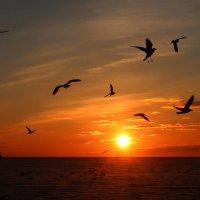 Провожая солнце... :: Нилла Шарафан