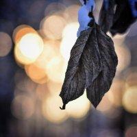 Листья зимой. :: Alexandra Dyachishina