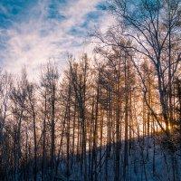 Зимним утром на сопке. :: Сергей Щелкунов