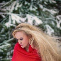 Холодный лес :: Максимилиан Сребный