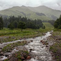В горах Абхазии-2. ПАСМУРНО. :: Natalia Furina
