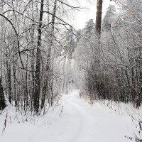 Январская зарисовка. :: Юрий Шувалов