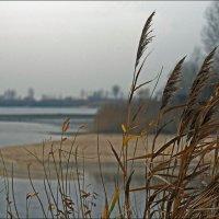 Осенне-зимнее :: Юрий Васильев