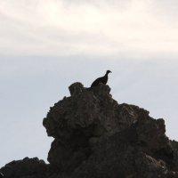 Фото 4.Птица Мегапод.(для ясности см. все 5 фото подряд) :: Антонина