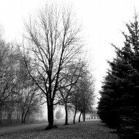 Туманная осень. :: Валерия  Полещикова