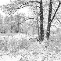 зима на лесном озере :: Евгений Мазурин