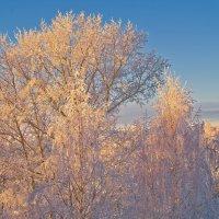 Деревья в шубы приоделись :: Валерий Талашов