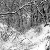 Зима, лощина.. :: Юрий Стародубцев