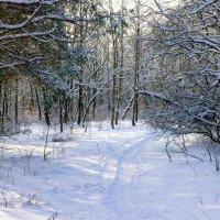 На тропе в зимнем лесу :: Юрий Стародубцев
