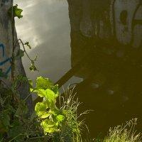 Травы, травы... :: Валентина Харламова