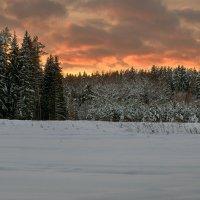 закат за лес :: yur neliist