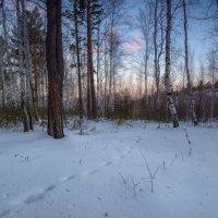 Февральское утро в лесу :: Сергей Брагин