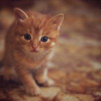 Осенний кот. :: Natalia Furina