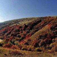 осенние холмы Киммерии :: viton