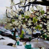 зимние светящие цветы :: Дмитрий Паченков