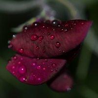 Сумеречный дождик :: Татьяна Соловьева