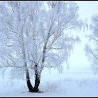 Зимнее утро :: Геннадий Ячменев