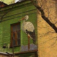Киев :: Стас