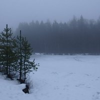 Февраль...туманное утро на озере... :: Ljudmila Korotkova