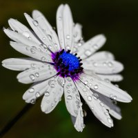 Цветок :: snd63 Сергей