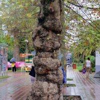 Ствол дерева :: Вера Щукина