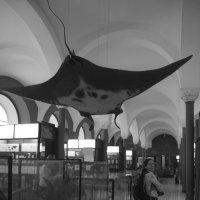 Ночь в музее_8 :: Марина Савчиц