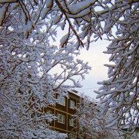 Резные снежные узоры... :: Анна Приходько