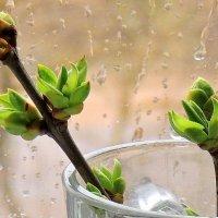 Пусть дождик за окном, весна уже стучится к нам :: Павлова Татьяна Павлова
