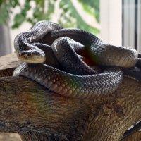 Змея :: Светлана Деева