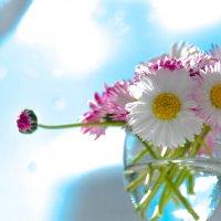 цветотерапия :: Тася Тыжфотографиня