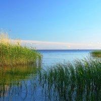 Псковское озеро :: Владимир Филимонов