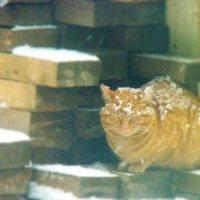 Эх, зимушка-зима...... :: Арина