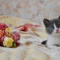 Котенок :: Любовь Лыжина