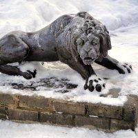 Чугунный лев :: Милешкин Владимир Алексеевич