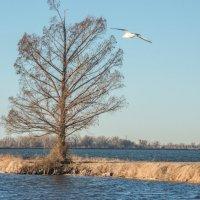 Зимний пейзаж в Оклахоме :: MVMarina