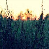Солнце :: Владлена Шатихина