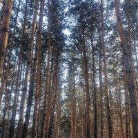 Прогулки по лесу :: Евгения Латунская
