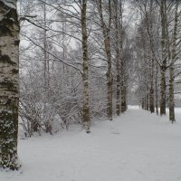 У нас вновь выпали снегА... :: Марина Харченкова