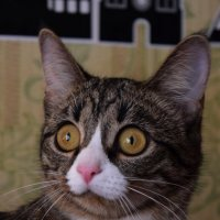очень странная кошка :: Екатерина Вьялкина
