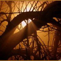 Ночной туман :: Андрей Заломленков