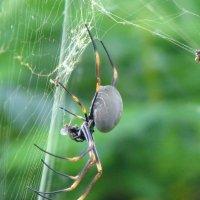 Сплел однажды паутинку паучок :: Антонина